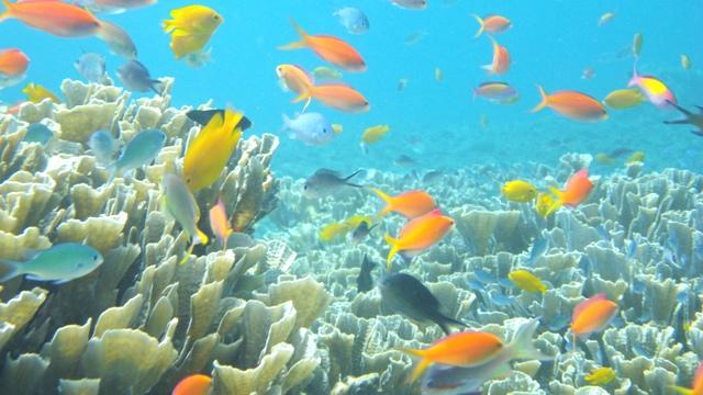 熱帯魚にサンゴ礁 まさにバリ島の海は竜宮城